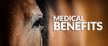 Haylo-Slow-Hay-Feeder-Medical-Benefits-for-your-horse
