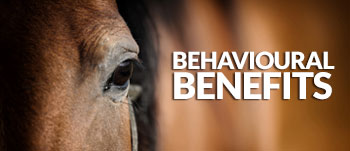 Haylo-Slow-Hay-Feeder---behavioural-Benefits-horses