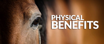 Haylo-Slow-Hay-Feeder--physical-Benefits-horses